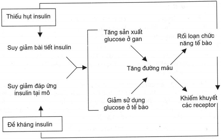 Tại sao người bệnh tiểu đường nên hiểu rõ về kháng insulin? Inulin có vai trò gì?