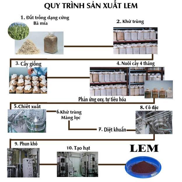 LEM là chất gì? LEM Nhật Bản - LEM chiết xuất từ hệ sợi nấm Shiitake