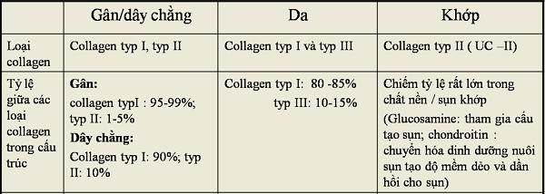 Collagen type 1 thành phần cấu tạo nên gân và dây chằng