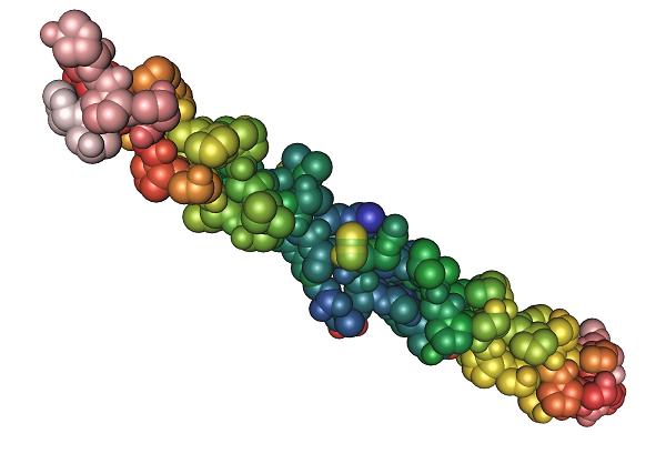 Collagen là một trong những loại protein trong cơ thể người