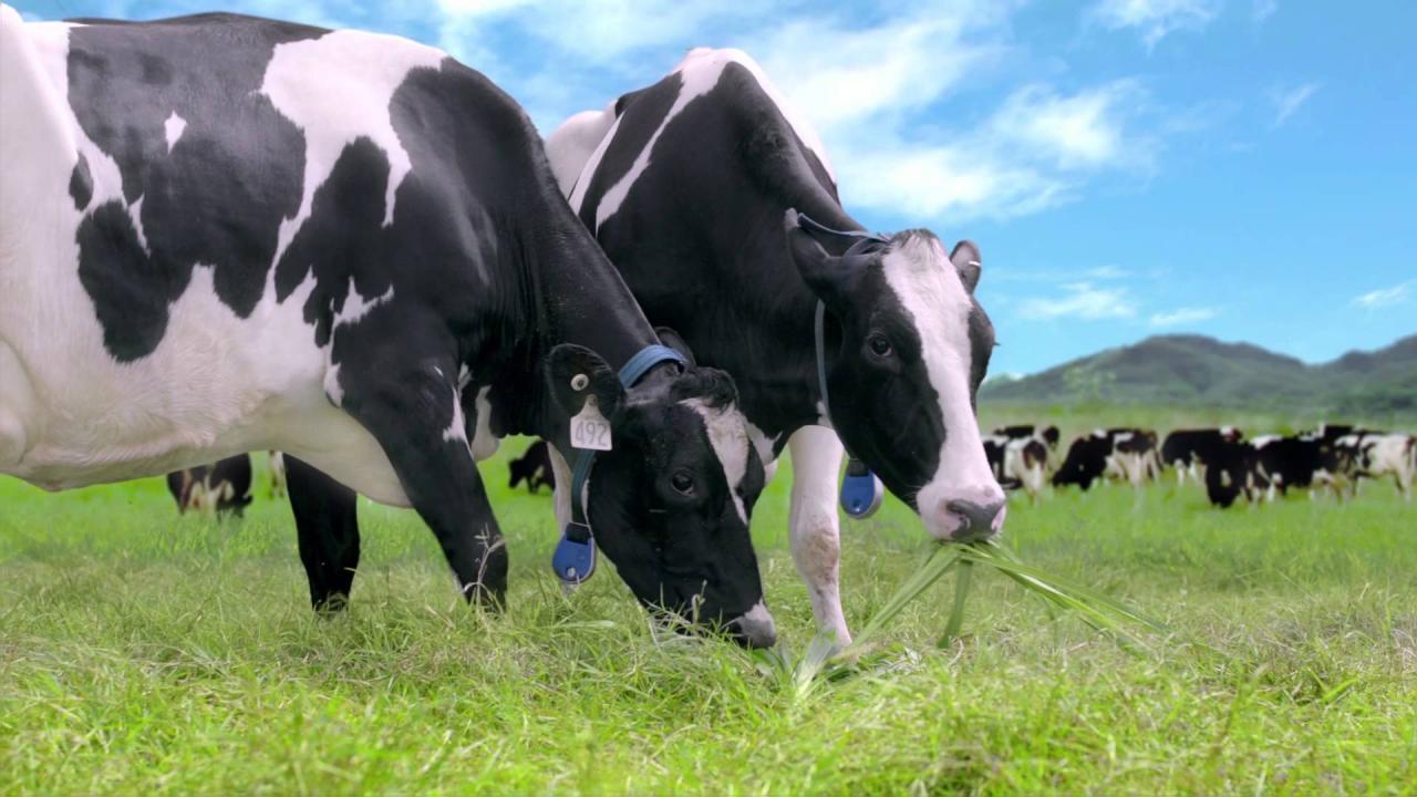Sữa bò không phải liệu pháp tối ưu cho phát triển chiều cao cho bé