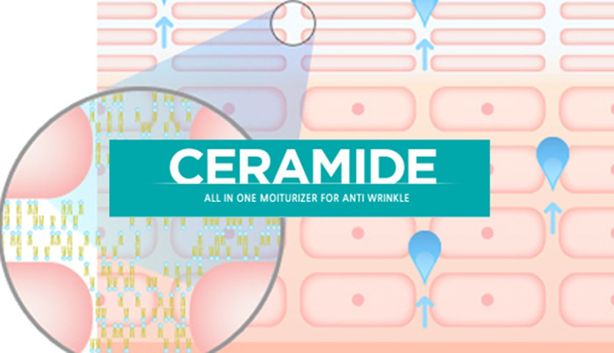 Ceramide là gì?